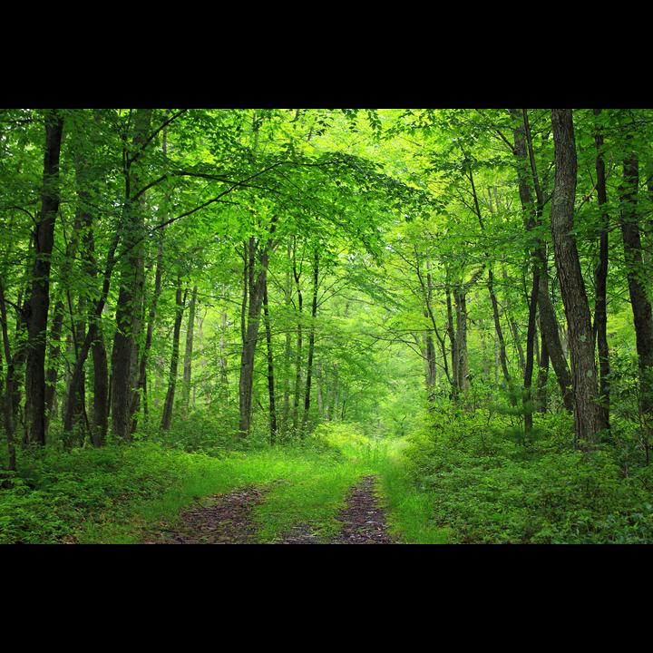 Beautiful British woodland
